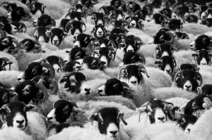 Wie ein Hammel in der Herde fühlt man sich bei einem Firmenlauf