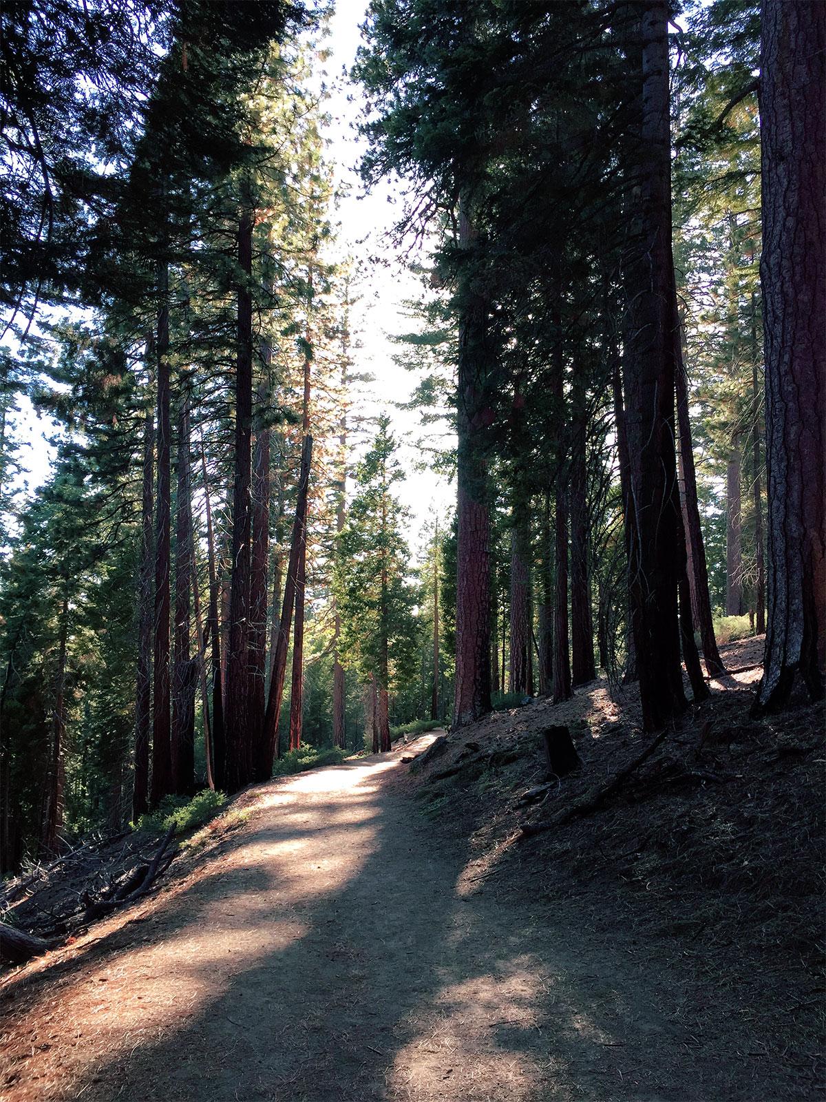 Sequioa-Wald