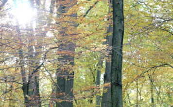 Bunte Bäume