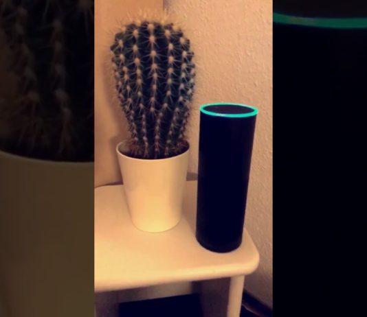 Alexa vor dem Kaktus