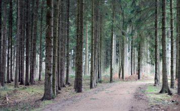Ein Weg im Wald
