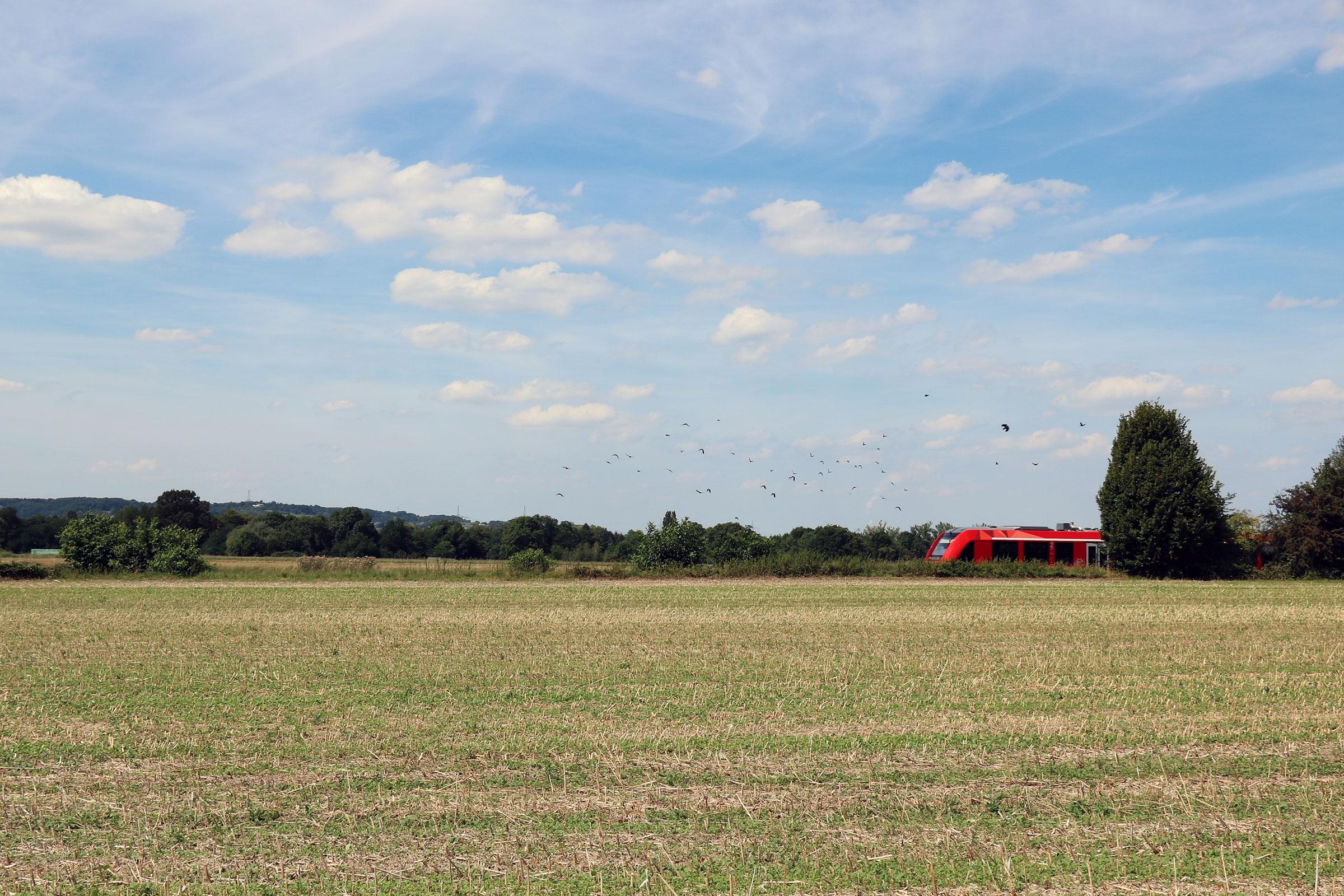 Ein roter Zug fährt von rechts durch ein Feld, schreckt einige Vögel auf.