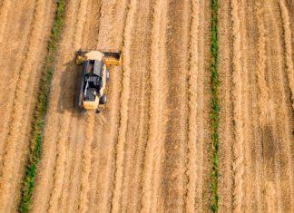 Ansicht von oben: Ein Mähdrescher fährt über ein abgeerntetes Feld.