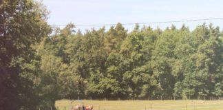 Eine Wiese, im Hintergrund Wald. Auf der Wiese klein eine Kuh, die aus einem Trog frisst.