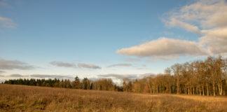 Zum blauen Himmel mit grauen Wolkenfetzen gibt es eine braungelbe Wiese, im Hintergrund Bäume
