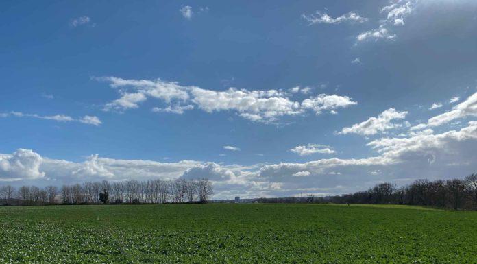 Ein sehr grünes Feld vor einem tiefblauen, mit weiß-grauen Wolken verzierten Himmel. Ganz klein am Horizont ist ein Hochhaus erkennbar.