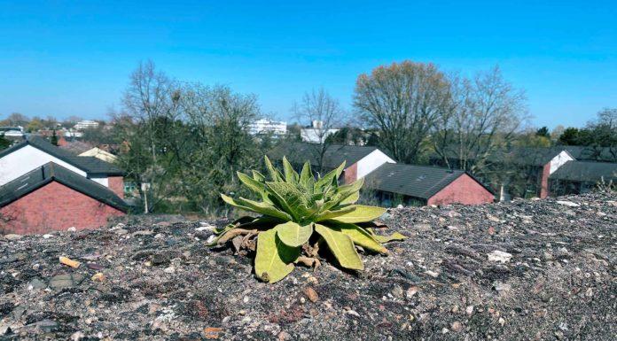 Eine Pflanze wächst auf einer Steinmauer, einsam und allein.