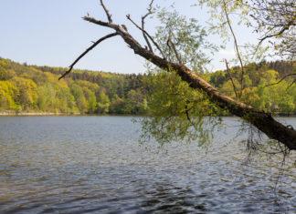 Ein See, von Wald begrenzt. Im Vordergrund ein großer Ast, der ins Bild hineinragt.