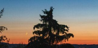 Sonnenuntergangsstimmung mit einer Mondsichel, man sieht eine Tanne als schwarzen Ausriss.