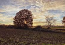 Foto gegen die tief stehende Sonne. Man sieht vor allem den Umriss eines blätterlosen Baums, hinter dem die Sonne steht. Daneben noch kleinere Bäume, im Vordergrund das Feld.