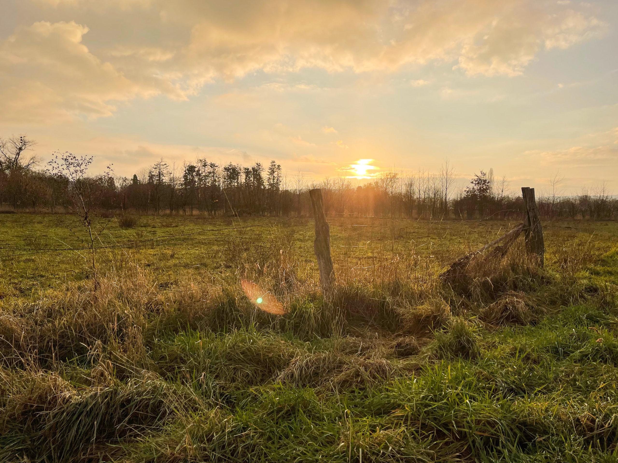 Sonnenuntergang vor einem Zaun und Wiese.
